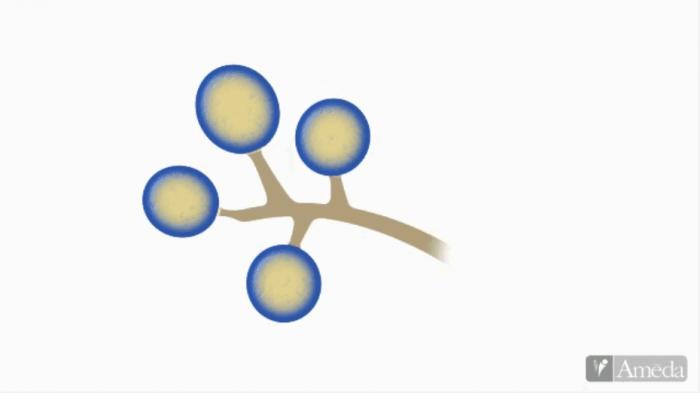 Alveolo es el centro de producción de leche materna